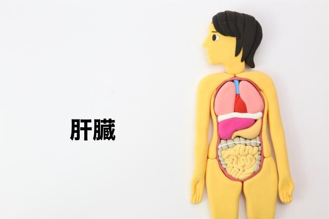 葉酸と肝臓